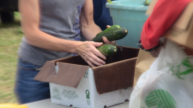 Fresh Zucchini Distribution