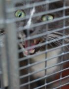 Feral feline of Baltimore